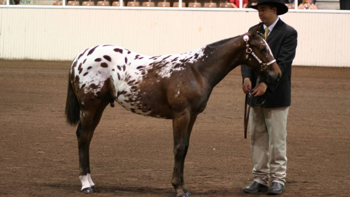Some Spotty Horse