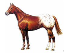 A picture containing horse, brown, mammal, standing  Description automatically generated